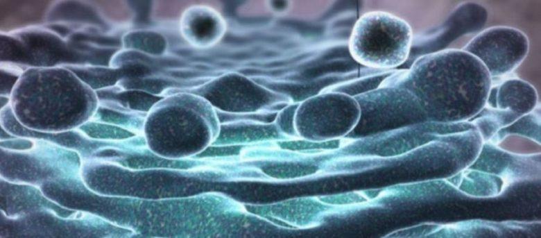 l43-batteri-corpo-umano-130604180415_big-780x343